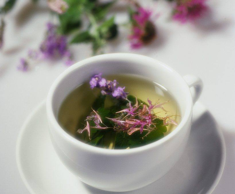 Tracy's Favorite Hayfever Tea
