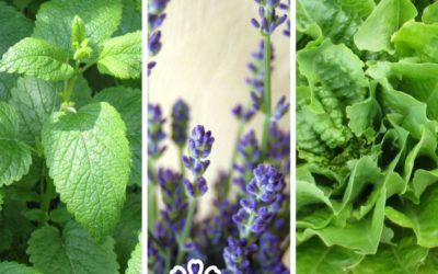Herbal sleep remedies from your garden